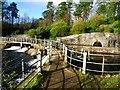 NS5576 : Mugdock Reservoir [3] by Robert Murray