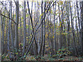 TR0455 : Perry Wood coppice by Stephen Craven