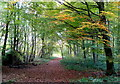 SK5278 : Footpath in Whitwell Wood by Andrew Hill