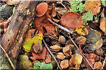 J4681 : Autumn carpet, Crawfordsburn Country Park by Albert Bridge