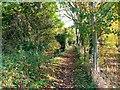 SU0494 : East along the Thames Path west of Ashton Keynes by Brian Robert Marshall