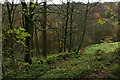 SD9829 : Moss-covered wall and trees in Hebden Dale by Bill Boaden