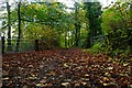 SE1427 : Old road running through Judy woods. by jonathon tattersall