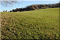 SO6466 : Farmland near Highwood by Philip Halling