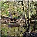 SO8992 : The edge of Spring Pool in Baggeridge Country Park near Sedgley by Roger  Kidd