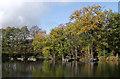 SO8992 : Island Pool in Baggeridge Country Park near Sedgley by Roger  Kidd