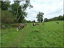 SU6017 : South Downs Society Green Travel Walks Week (169) by Basher Eyre