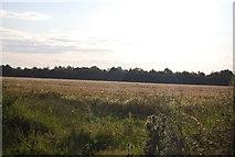 TG2103 : A field of Barley by N Chadwick