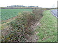 TL1584 : Conington Round Hill from Sawtry Road by Marathon
