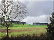 SO8991 : Crop field south-east of Wombourne, Staffordshire by Roger  Kidd