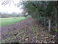 TQ0338 : Wey South Path south of Elmbridge Road by Dave Spicer