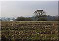 SD4481 : Meathop Moss by Ian Greig