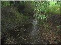 SJ6067 : A tributary of Shays Lane Brook by Dr Duncan Pepper