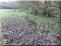 SJ6067 : Muddy grazing beside Shay's Lane Brook by Dr Duncan Pepper