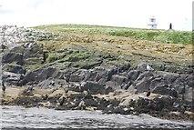 NU2135 : Cliffs on Inner Farne by N Chadwick