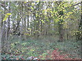 SJ6363 : Woodland in Hall Lane by Dr Duncan Pepper