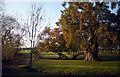 SU5199 : The College Oak, Radley Park by Des Blenkinsopp