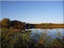 NT6578 : Coastal East Lothian : Autumn at Seafield Pond, Belhaven by Richard West