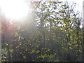 SJ6762 : Inside Boundary Wood by Dr Duncan Pepper