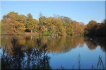 TL7604 : Middle Lake, Danbury Lakes by Trevor Harris