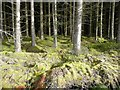 NX4797 : Colourful forest floor by Humphrey Bolton