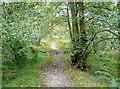 NZ6908 : Danby Park by Graham Horn