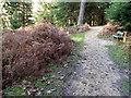 SU2408 : Woodland path, Bolderwood by Maigheach-gheal