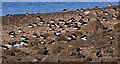 J3878 : Oystercatchers, Holywood by Albert Bridge
