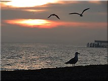 TQ8109 : Gulls on Pelham Beach by Oast House Archive
