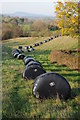 SO4512 : Black silage bales, Trothy valley by Philip Halling