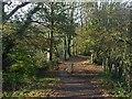 ST1380 : The Taff Trail near Radyr by Robin Drayton