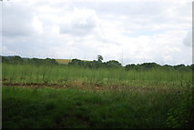 SU7824 : Crop by the Sussex Border Path by N Chadwick