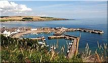 NO8785 : Stonehaven harbour by Robert W Watt