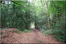 SU7824 : Sussex Border Path, Durford Wood by N Chadwick