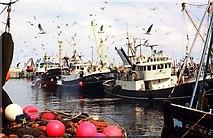 NJ9967 : Purse seine boats landing herring by Robert W Watt