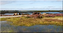 NF7938 : Wild Eriskays by Loch Druidibeag by Robert W Watt