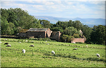 NY5237 : East Brownrigg by Peter McDermott