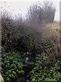SE3775 : Over-grown Stream by Matthew Hatton