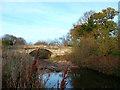 TQ1078 : Bridge to Cranford Park by Des Blenkinsopp