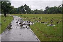 SP0683 : Geese, Cannon Hill Park by N Chadwick