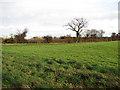 TF9026 : Fields near Oxwick by Evelyn Simak