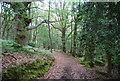 SU7926 : Sussex Border Path in Rake Hanger Wood by N Chadwick