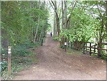 SP0626 : Four woodland ways 2011 by Michael Dibb