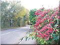 SU8950 : Grange Road, Ash by Colin Smith