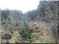 NY6191 : Unnamed Sike, Kielder Forest by Les Hull