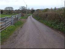 ST0106 : Colebrooke Lane east of Heron's Farm by David Smith