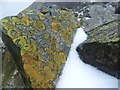 NY2208 : Lichen and Snow by Michael Graham