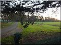 TF6528 : Driveway to Wood Farm, Wolferton, Norfolk by Richard Humphrey