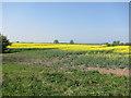 TL2876 : Oil seed rape fields by Hugh Venables