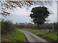 TF7319 : Narrow lane near Gayton in Norfolk by Richard Humphrey